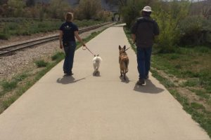 Belgium Malinois River walk training, Durango Dog Training