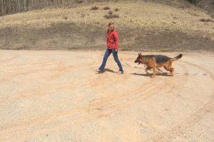 off leash recall Training