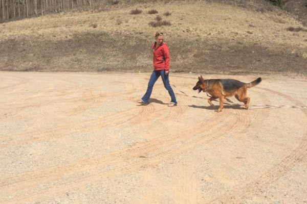 off leash recall Training