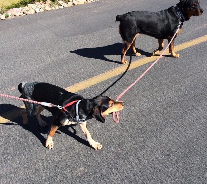 Who's walking who?