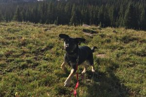 Ready for Action, hiking with your dog, Durango CO