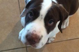 Puppy Training, Farmington NM