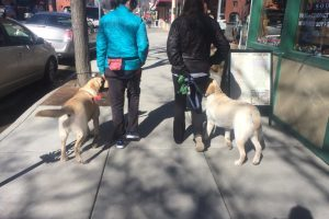 Dog manners training downtown Durango
