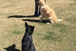 Durango Dog Training, Manners in the park
