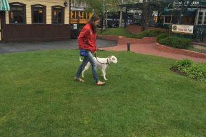 Leash walking in downtown Durango