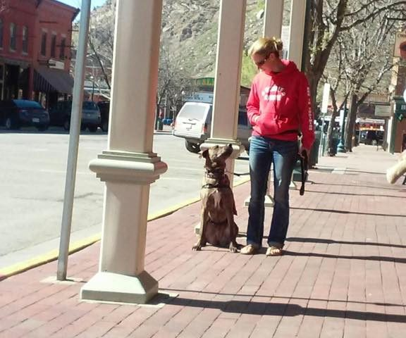 Dog In Training on Main Street