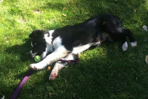 Puppy training, Durango CO