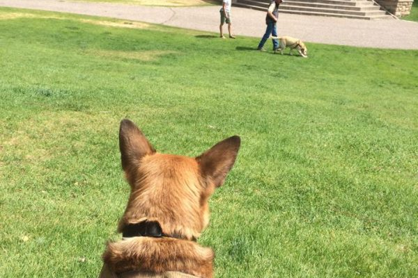 Durango Dog Training