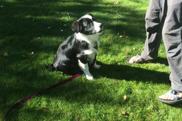 Puppy training, Durango CO