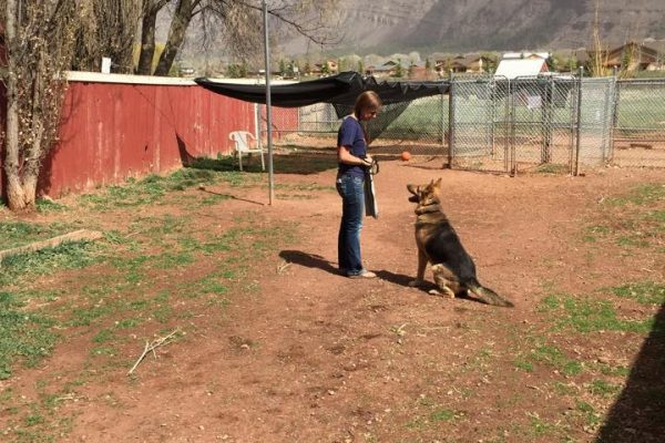 German Shepherd dog training, Durango CO