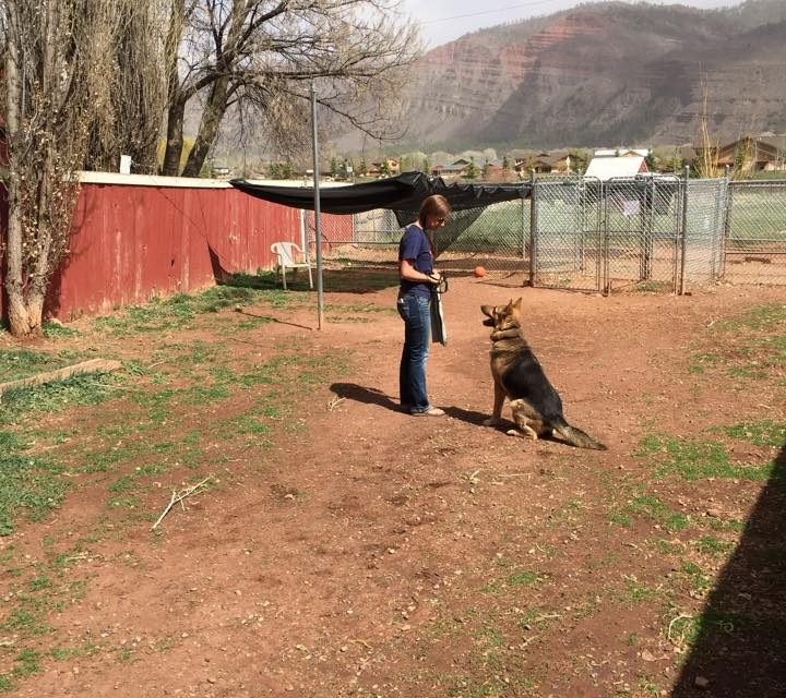 German Shepherd dog training, Durango CO