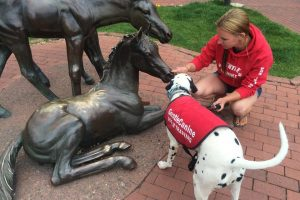 downtown Durango dog training