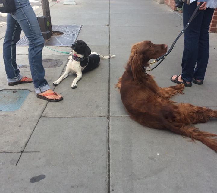 Dog training, Durango CO