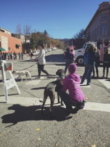 Dog Training in Durango CO