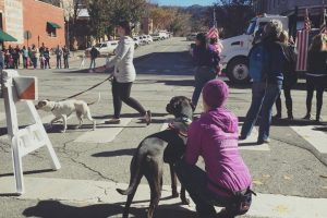 Dog Training in Durango CO