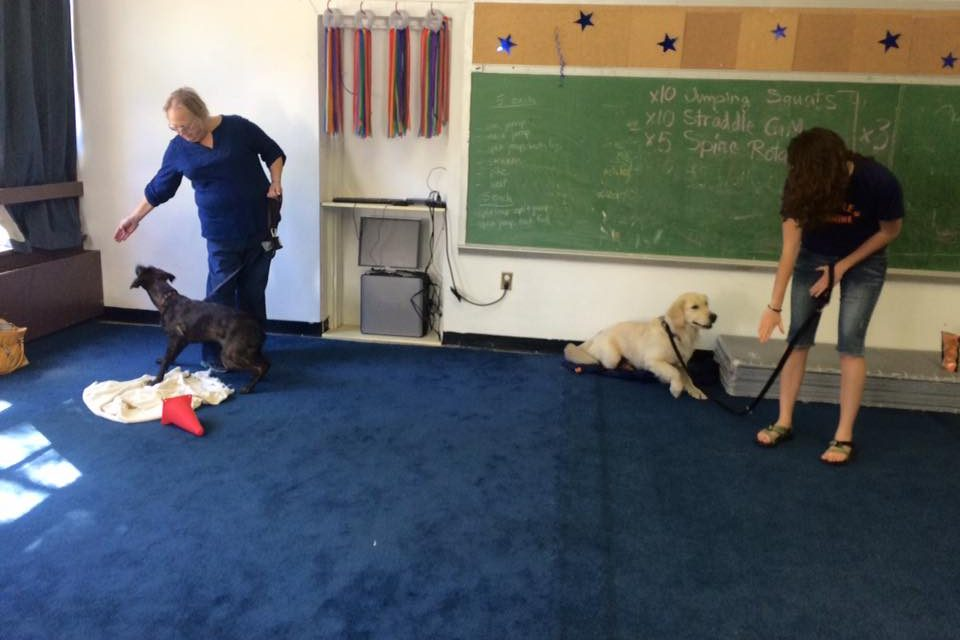 AKC Good Citizen Class in Progress