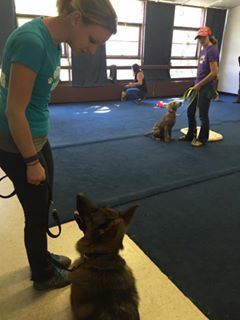 Dog Training in Progress