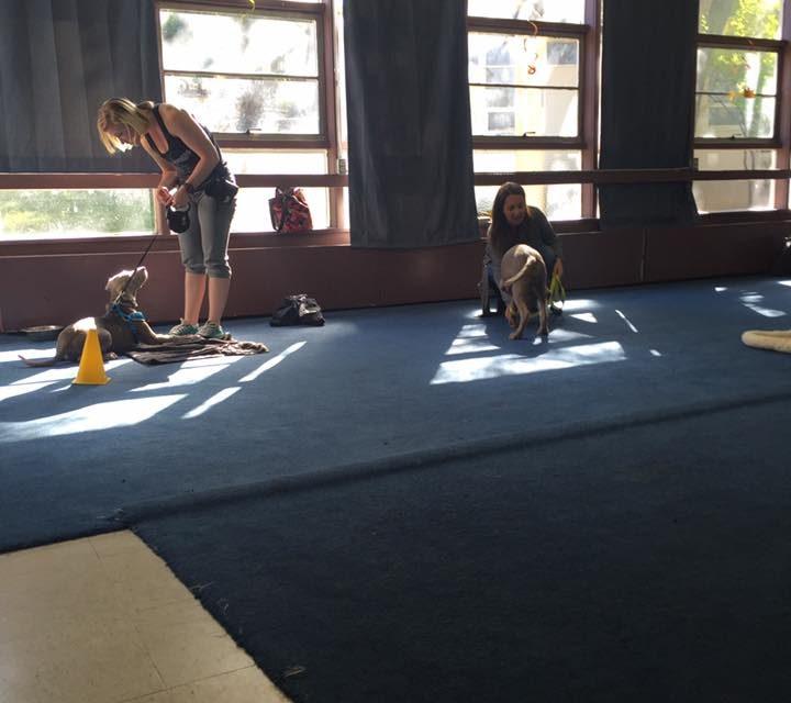 Gentle Canine Dog Training