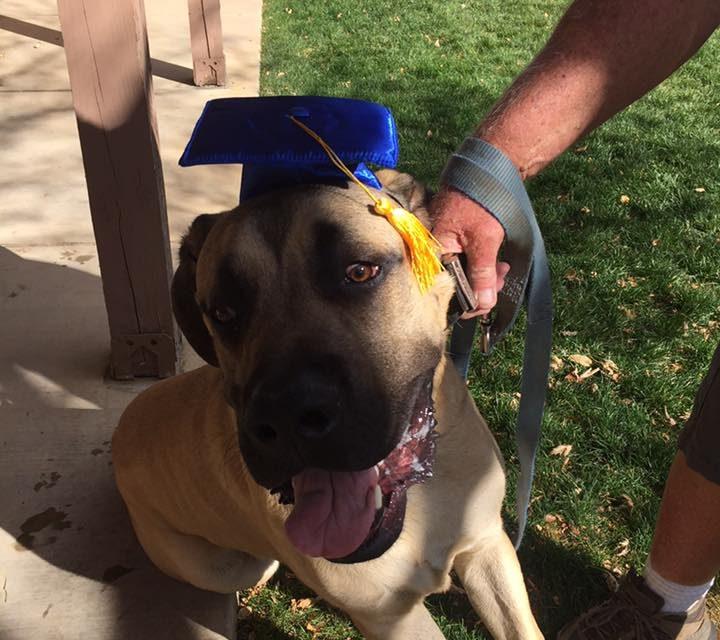 Puppy Class Graduate